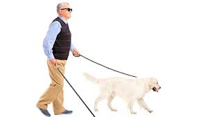 blind with dog