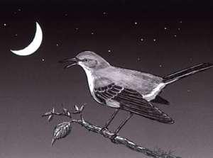 bird at night