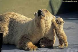 baby and mama bear