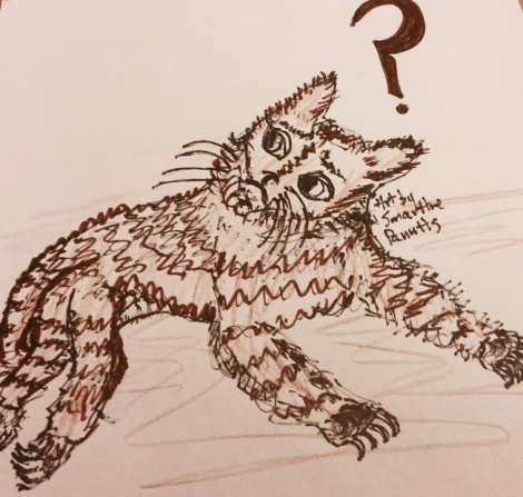 cracked-5-confused-cat